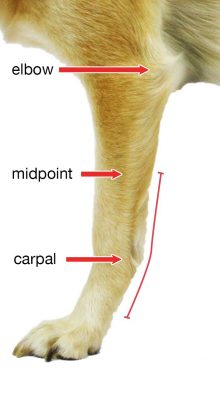 walkin-carpal-splint_measurement