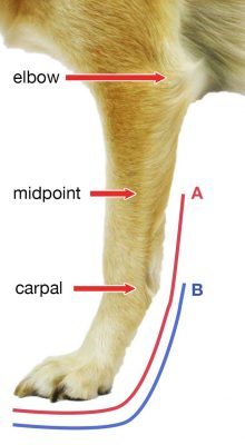 walkin-front-splint_measurement